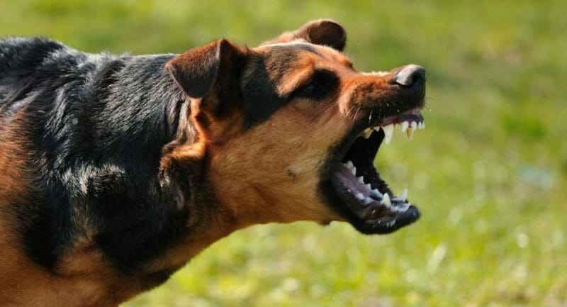 how do dogs show emotion angry anger