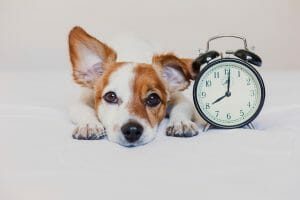 Benefits of Spaying and Neutering Dogs when to spay neuter