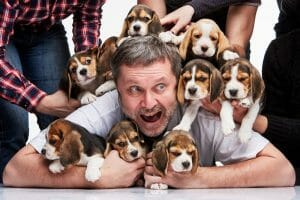 Benefits of Spaying and Neutering Dogs Overpopulation