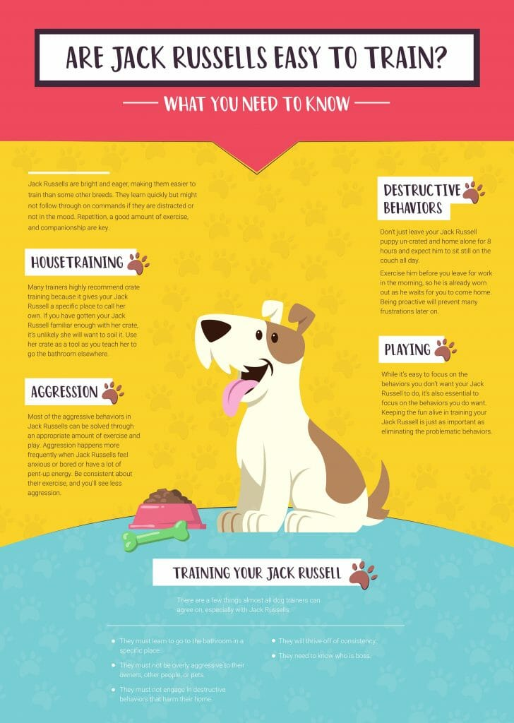 Are Jack Russells Easy to Train What You Need to Know