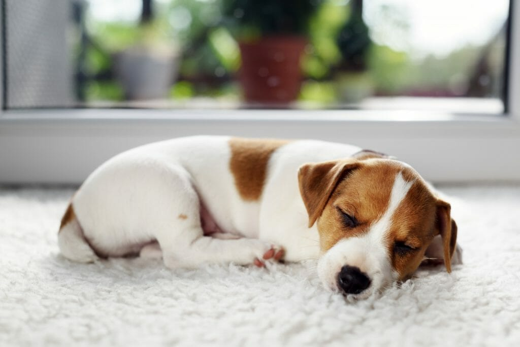 How many hours does a puppy sleep