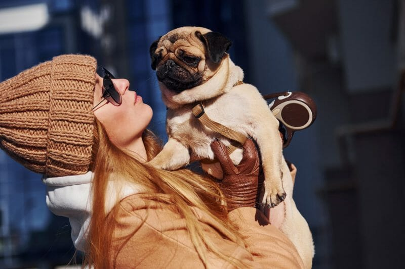 Best Dog Breeds for Small Spaces | Pug